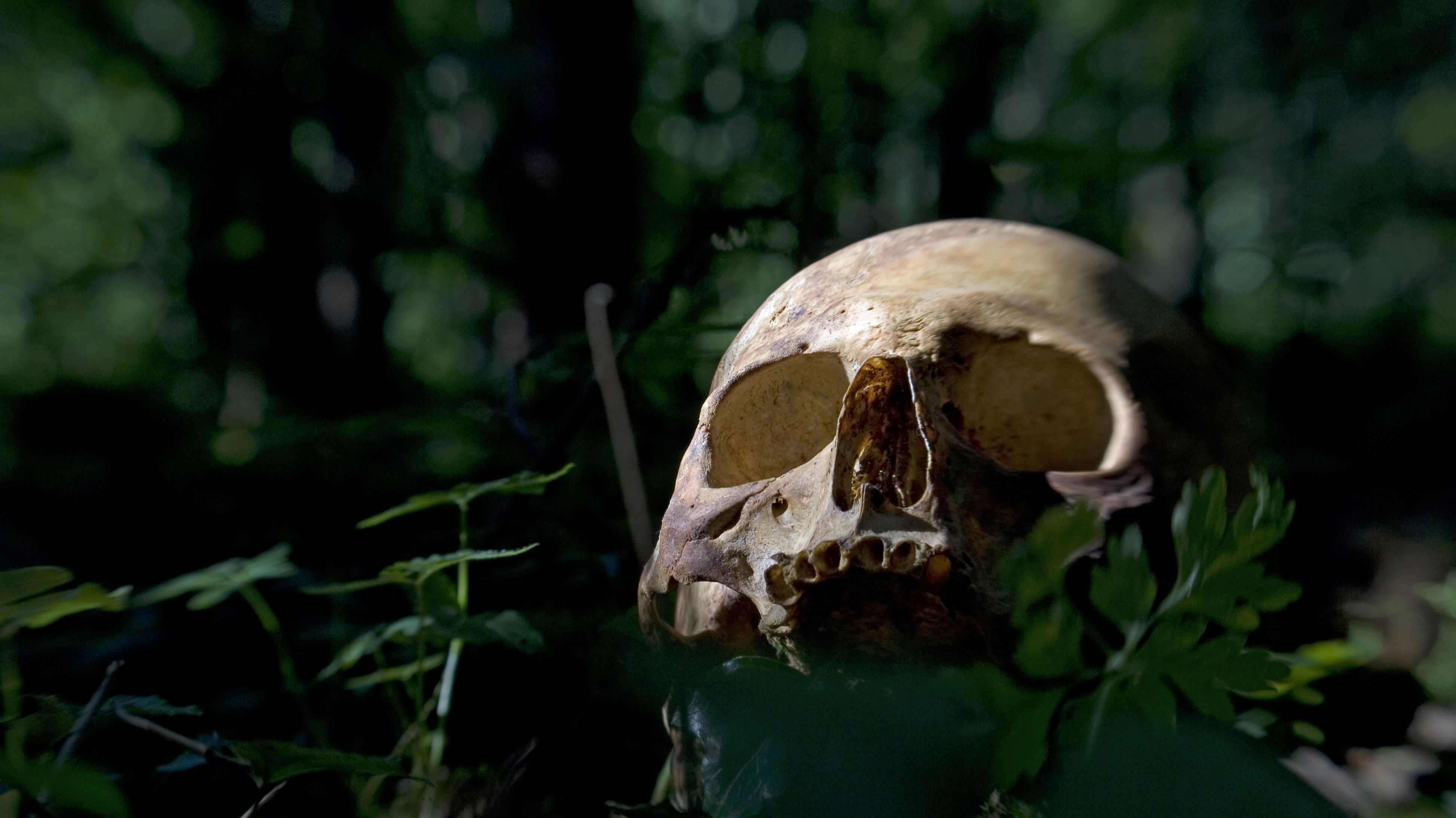 Land Of Dead Will Continue To Welcome >> Welcome To The Body Farm Mental Floss