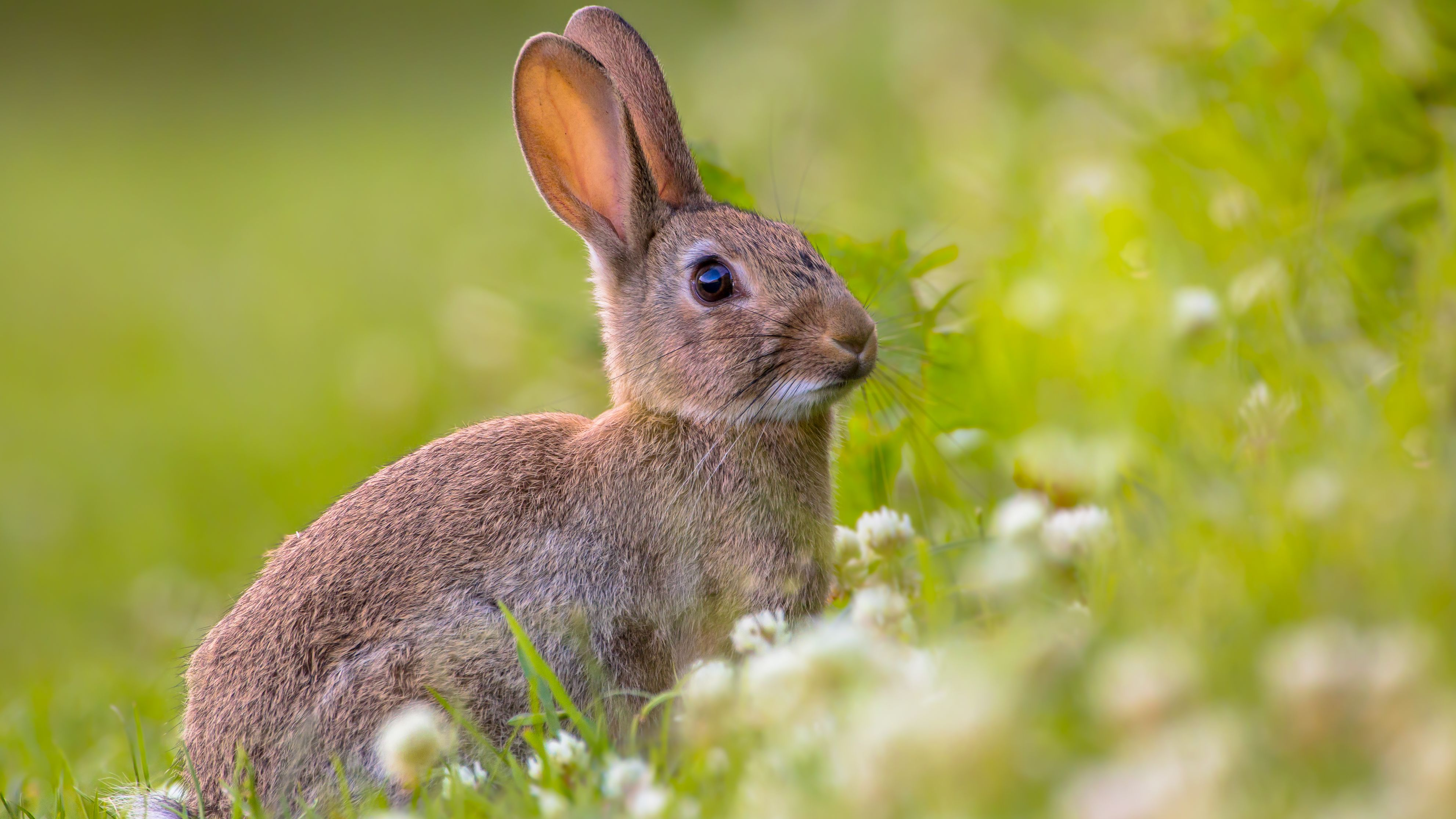 Are Rabbits as Prolific as Everybody Says? | Mental Floss
