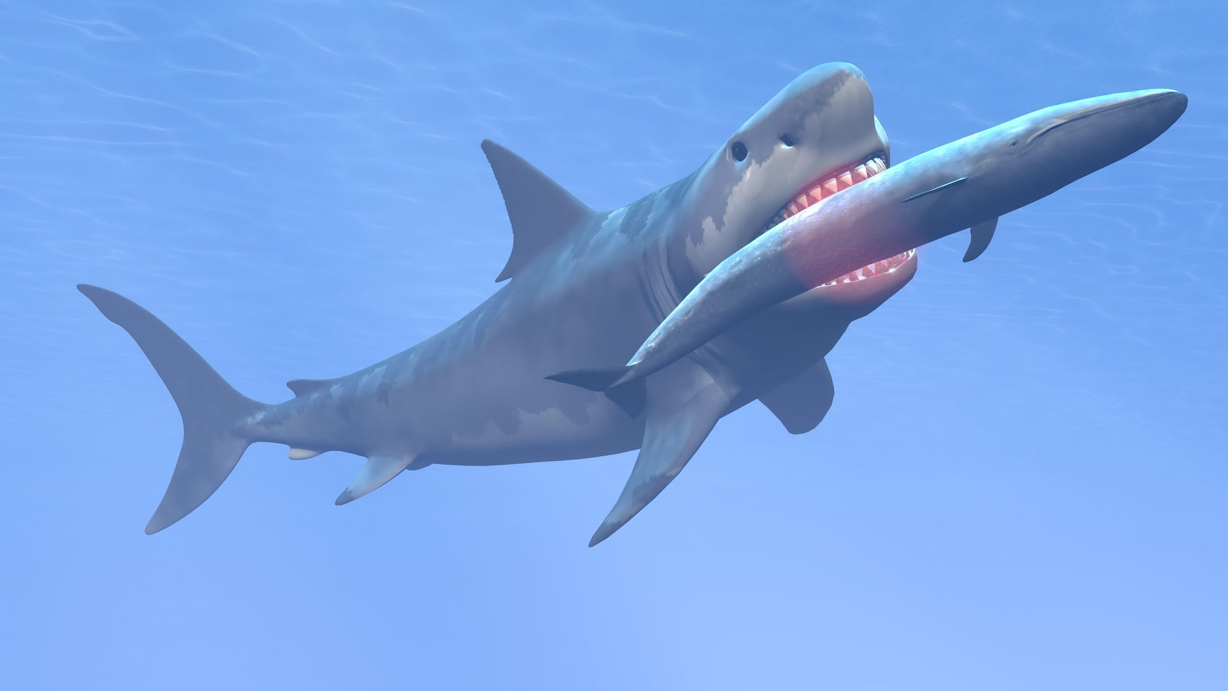 Megalodon Attack YouTube Our Oceans Megalodon shark