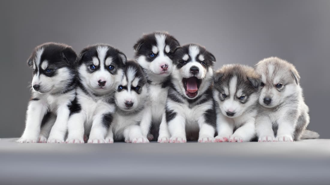 25 Facts About Puppies | Mental Floss