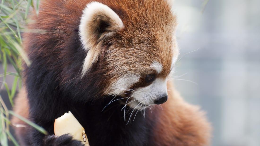 zoo animals australian fruit says joel istock sugary too its