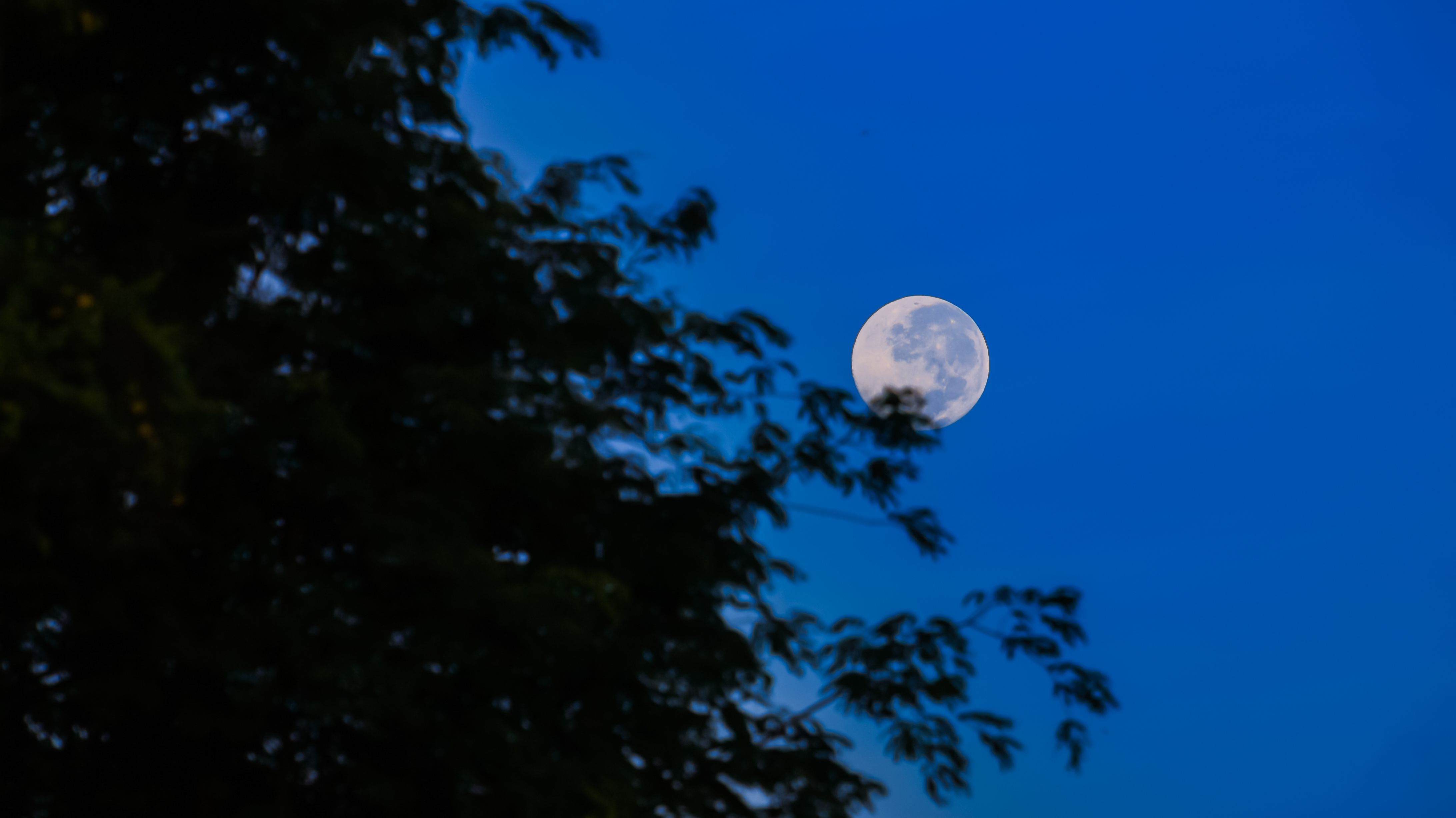 Rare Harvest 'Micromoon' Will Appear on Friday the 13th - Mental Floss