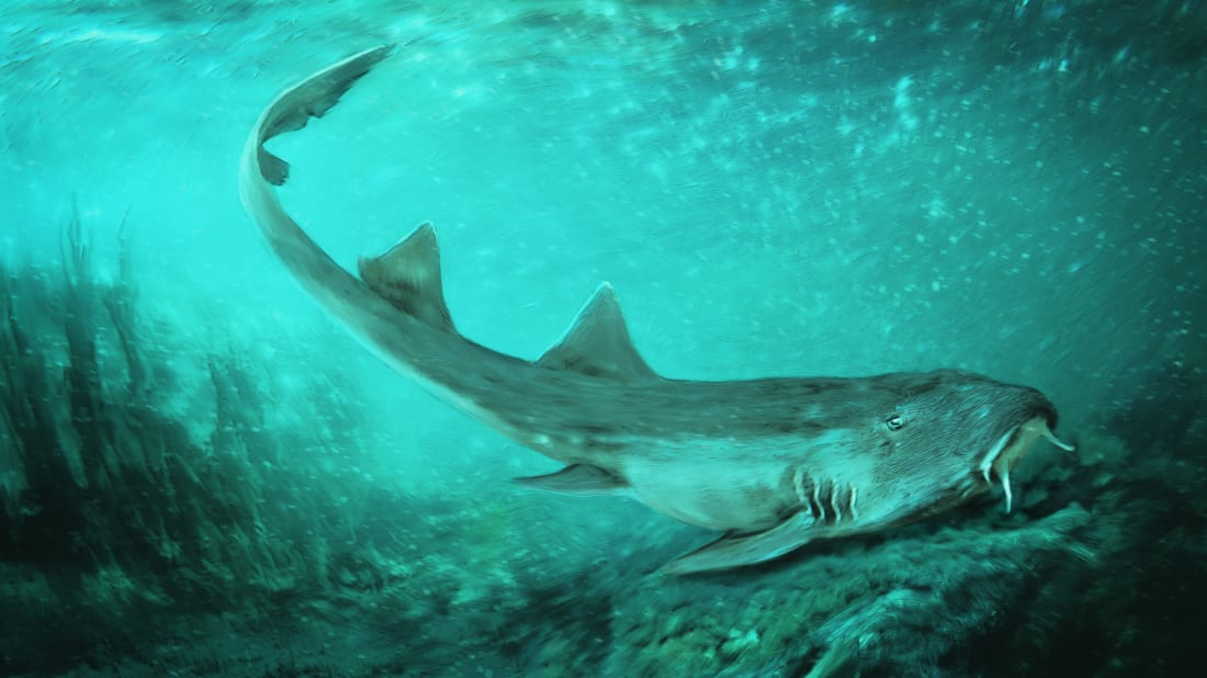 A Newly Discovered Species of Prehistoric Shark Was Named After the Video Game Galaga