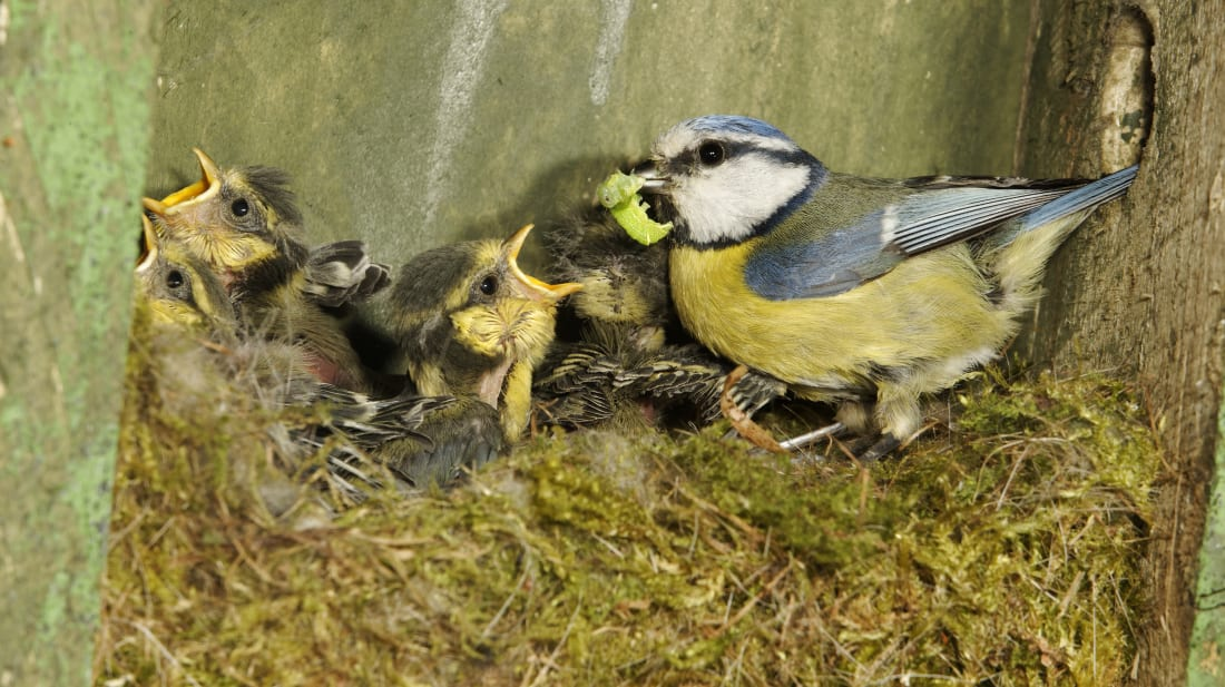 If You Touch a Baby Bird, Will Its Mom Abandon It? | Mental