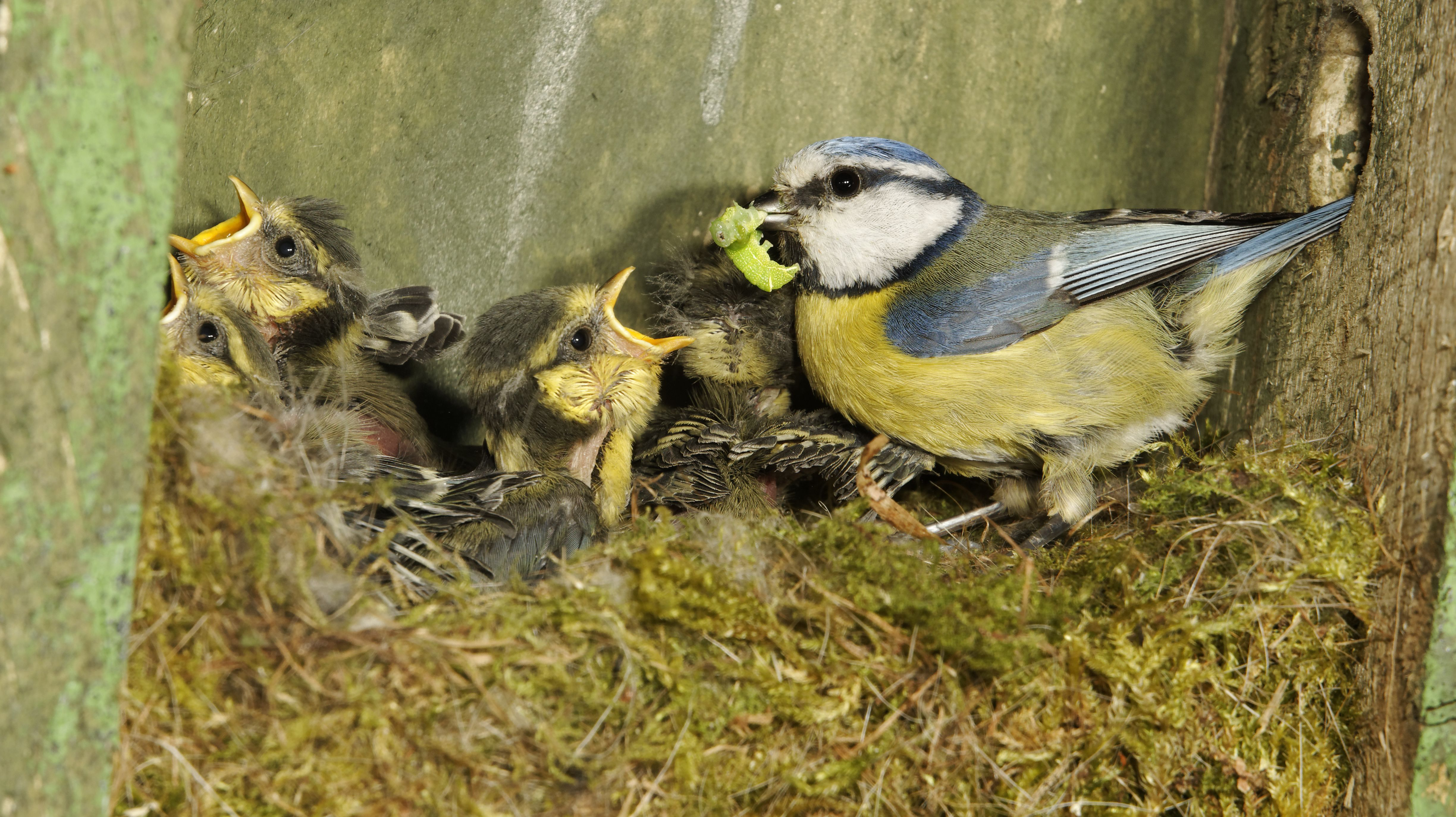 If You Touch a Baby Bird, Will Its Mom Abandon It?