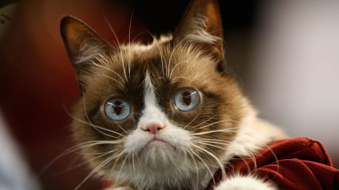 15 Facts About Grumpy Cat | Mental Floss