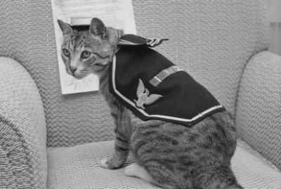 Pooli the cat modeling her uniform on her 15th birthday.