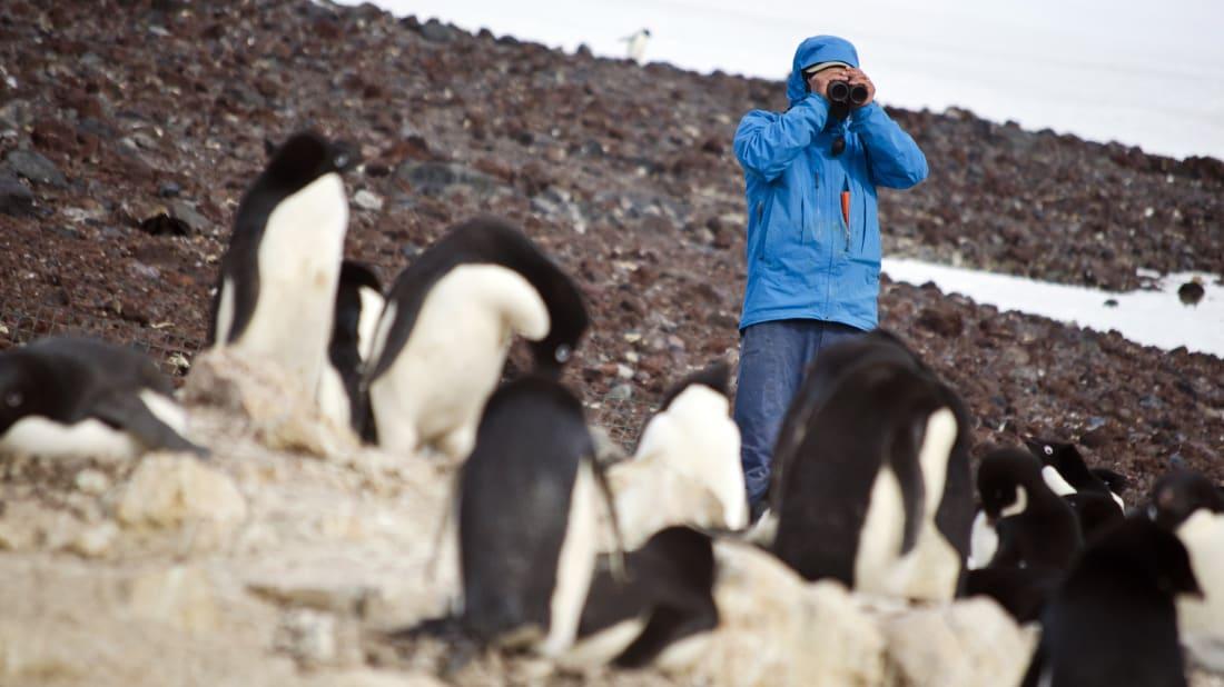 A scientist monitors one of the world's largest Adélie penguin colonies near Cape Crozier, Antarctica.