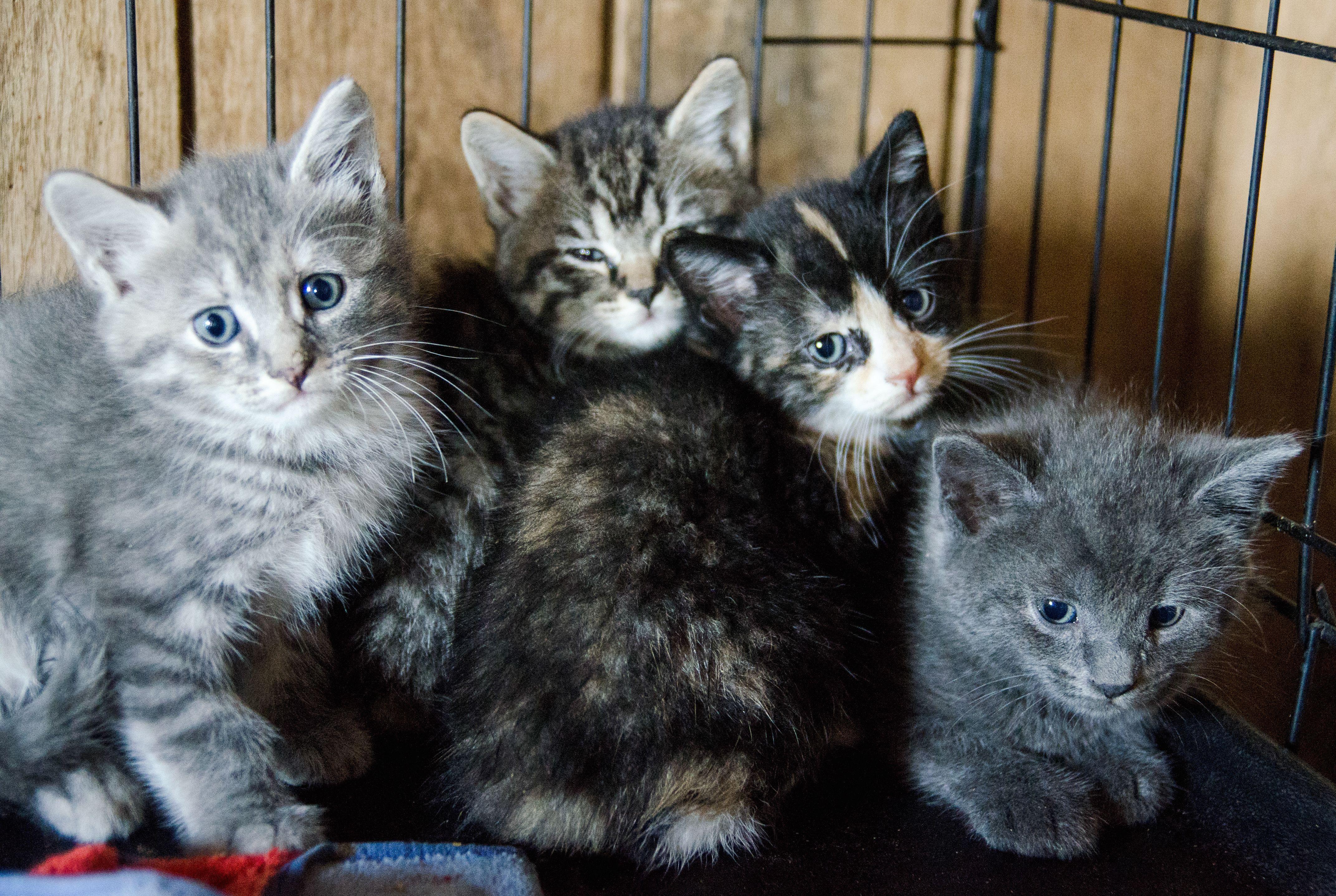 11 Expert Tips for Adopting a Cat | Mental Floss