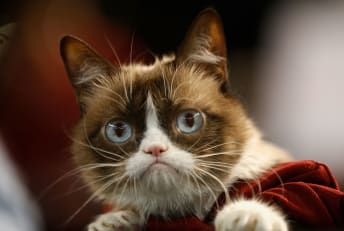 Grumpy Cat attends a baseball game between the Arizona Diamondbacks and the San Francisco Giants at Chase Field on September 7, 2015 in Phoenix, Arizona.