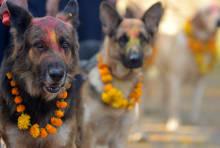 Prakash Mathema, AFP/Getty Images