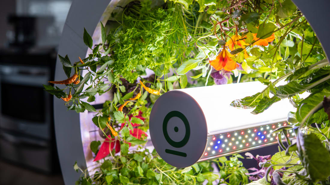 Grow Up to 90 Fruits and Vegetables in Your House With This Auto-Watering Indoor Garden