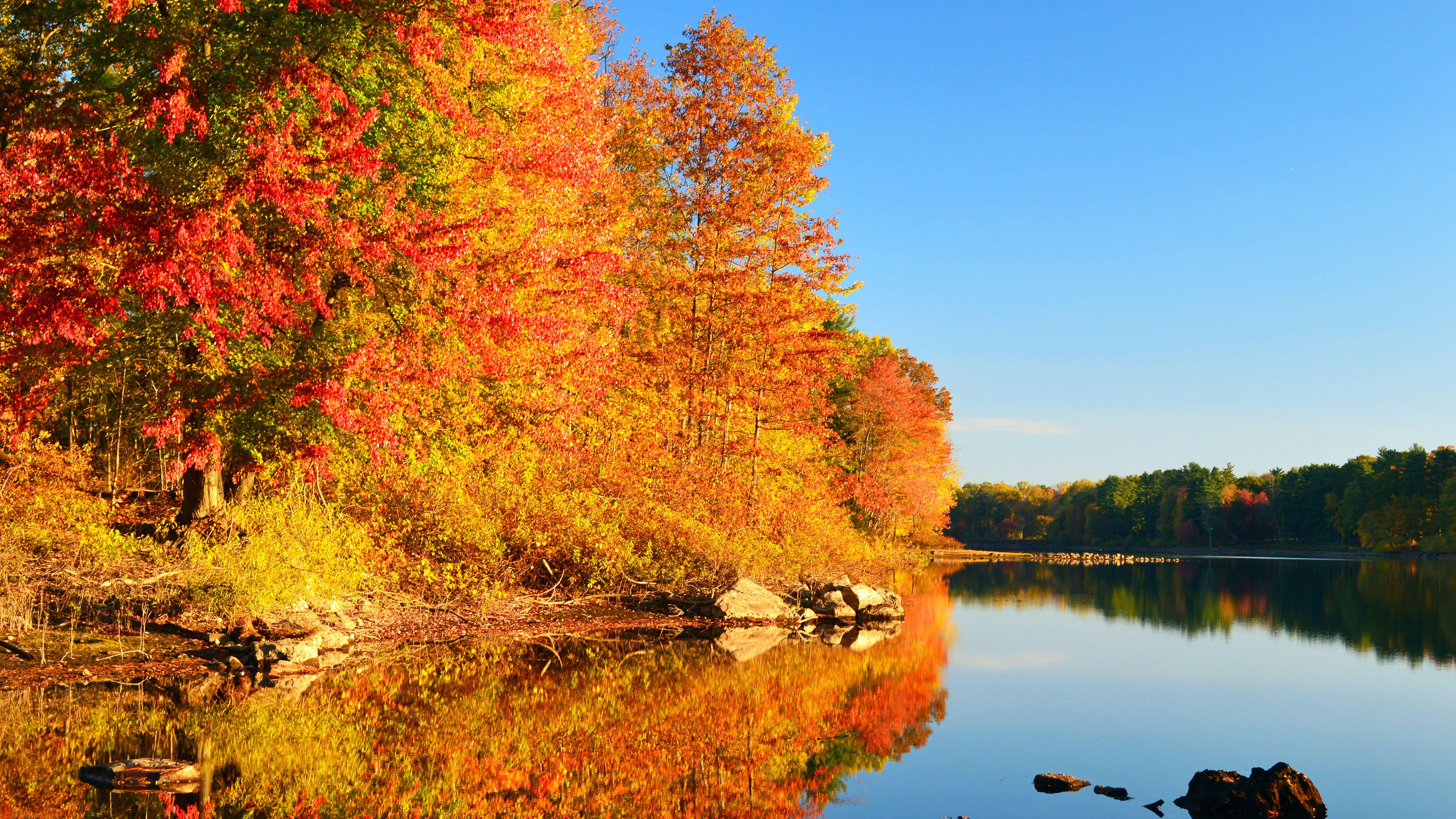 Fall Foliage Prediction Map 2020.Get Excited For Fall With This Interactive Peak Foliage Map