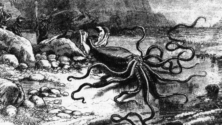 20 Freaky Facts About the Giant Squid | Mental Floss
