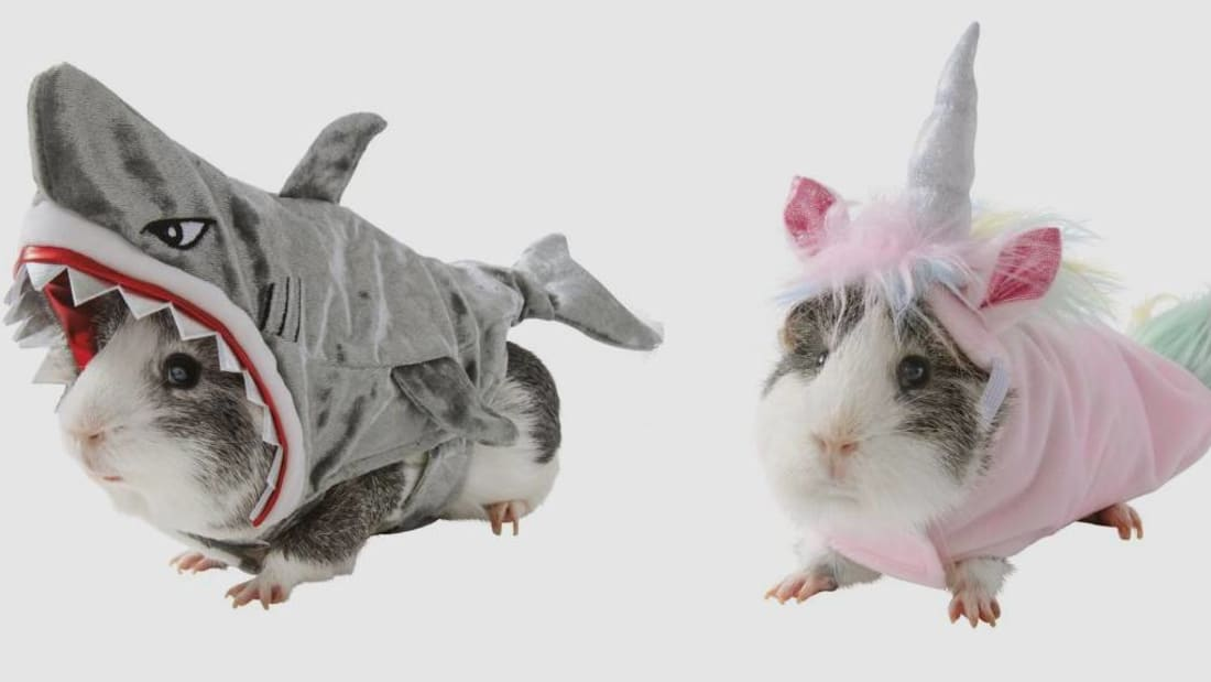 PetSmart Is Selling Guinea Pig Costumes for Halloween