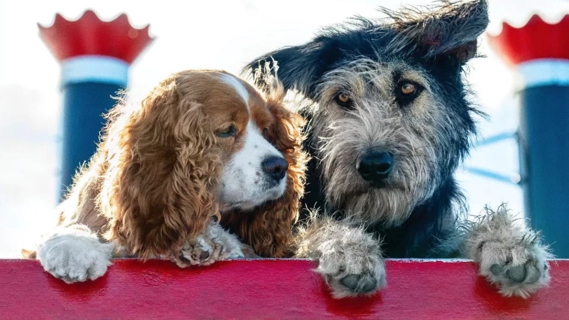 Disney's Lady and the Tramp Remake Will Star a Mixed-Breed Rescue Dog Named Monte