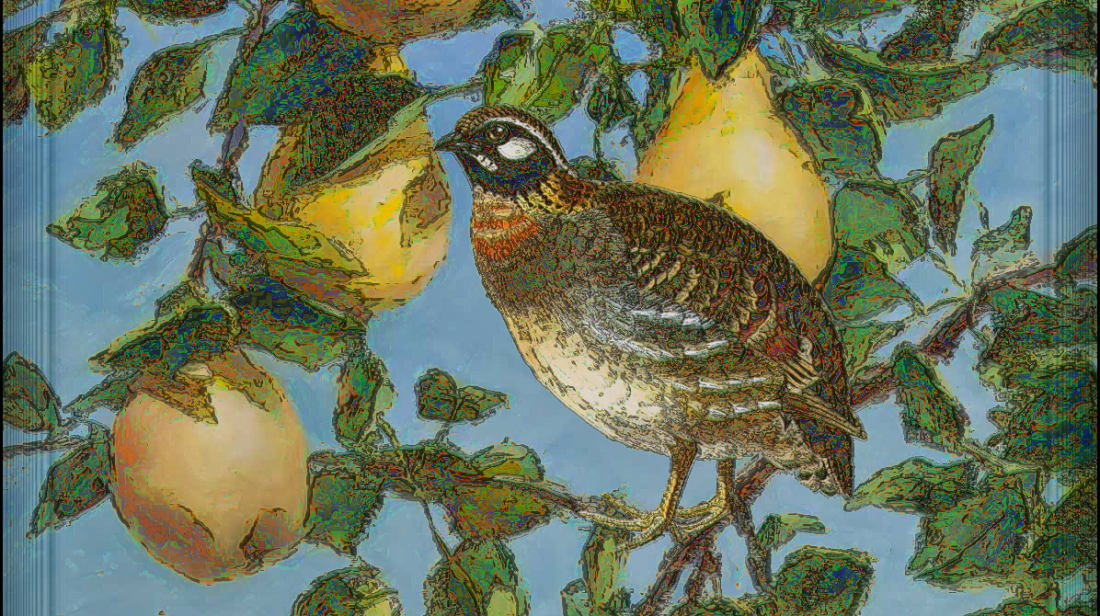 Not every version of the song features a partridge in a pear tree.