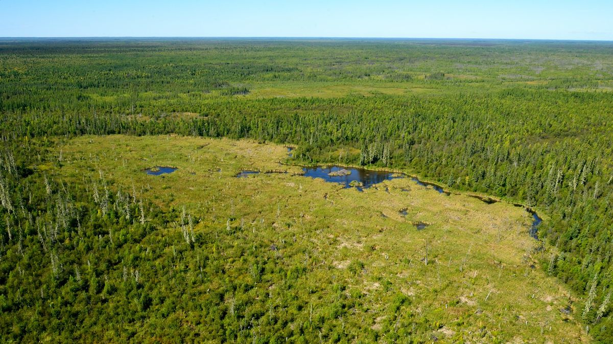 Behold! The World's Largest Beaver Dam | Mental Floss
