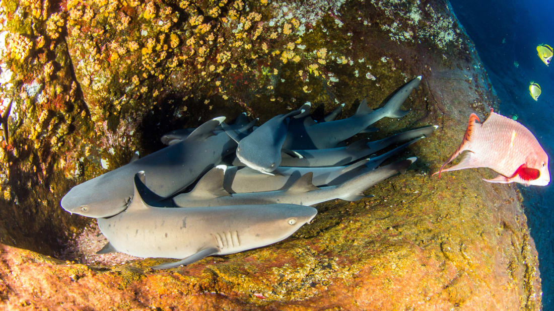 Rare Footage Shows the Cuddly Sleeping Habits of Sharks
