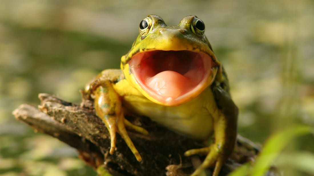The Reason Some Frogs Grow Extra Legs Mental Floss