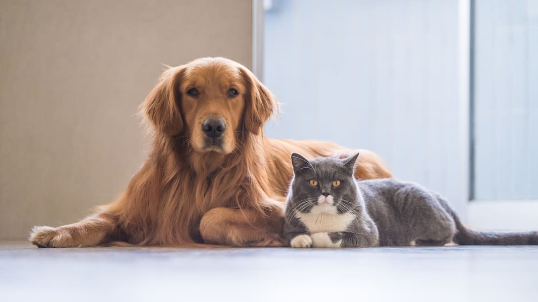 d3d327491f 8 Tricks to Help Your Cat and Dog to Get Along