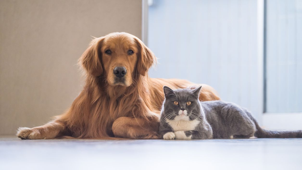 8 Tricks to Help Your Cat and Dog to Get Along | Mental Floss