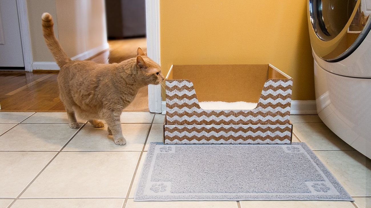 Get Cat Litter and a New Disposable Litter Box Every Month With This Subscription Service
