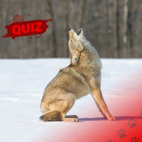 Can You Identify These Wild Animals?