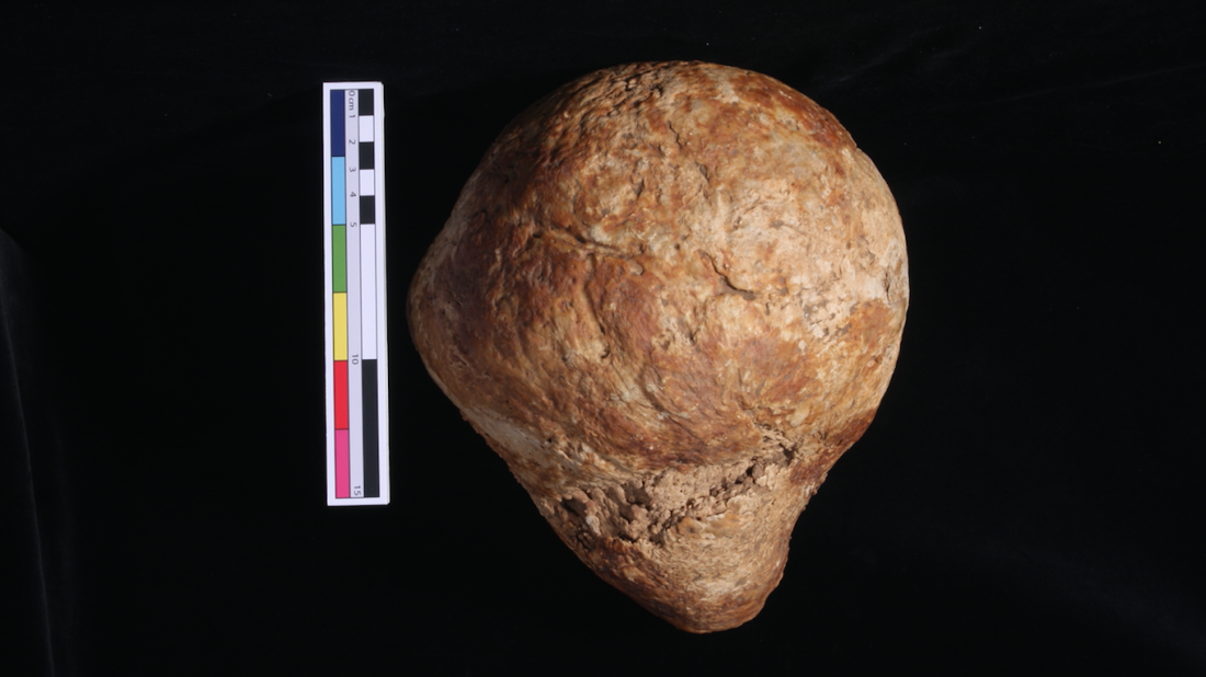 Photo courtesy of G. Cole, C. Rando, L. Sibun, and T. Waldron; UCL Institute of Archaeology