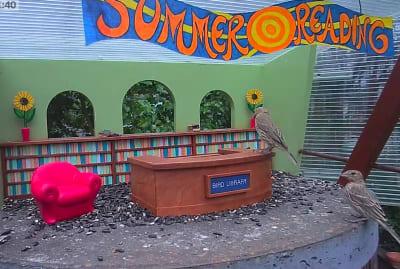 Bird Library, YouTube