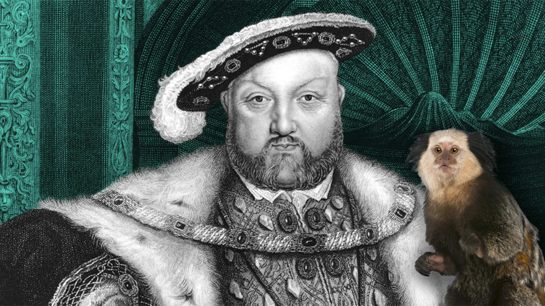 Hulton Archive/Getty Images (Henry VIII), iStock (Marmoset)