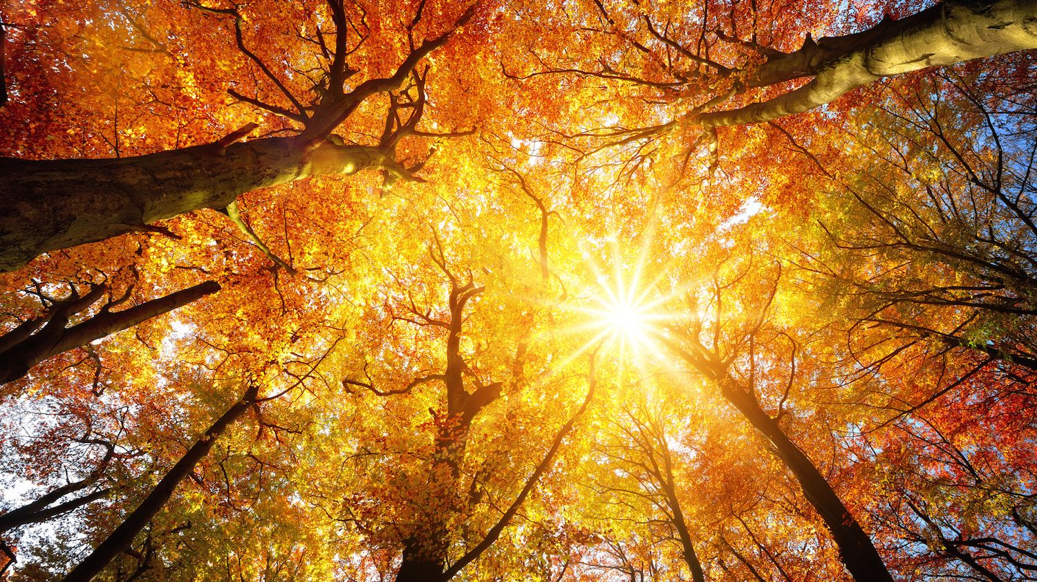 Last Month Was the Second-Warmest October on Record - Mental Floss
