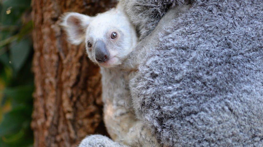 Australia Zoo/Ben Beaden