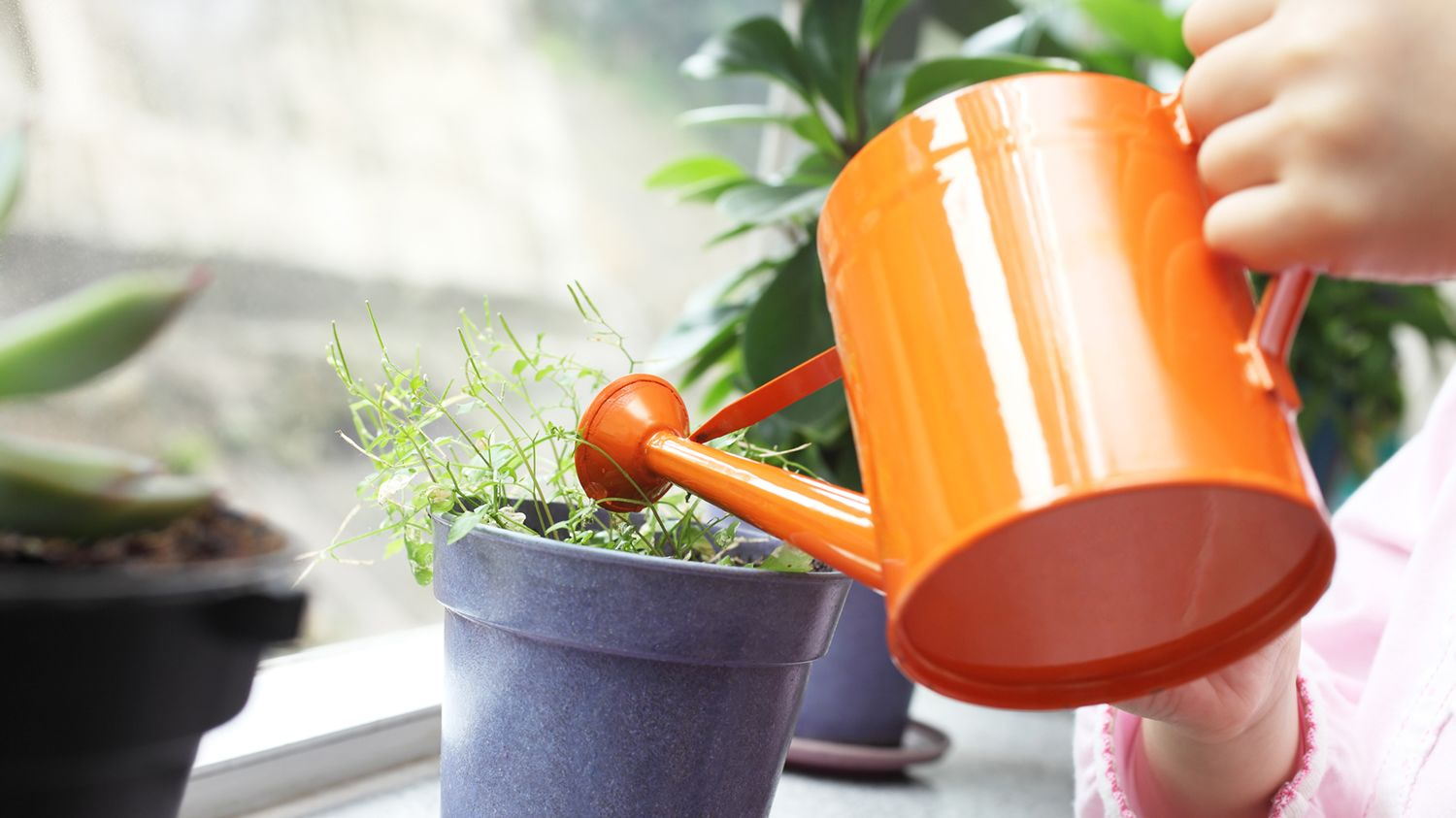 Image result for watering small pots