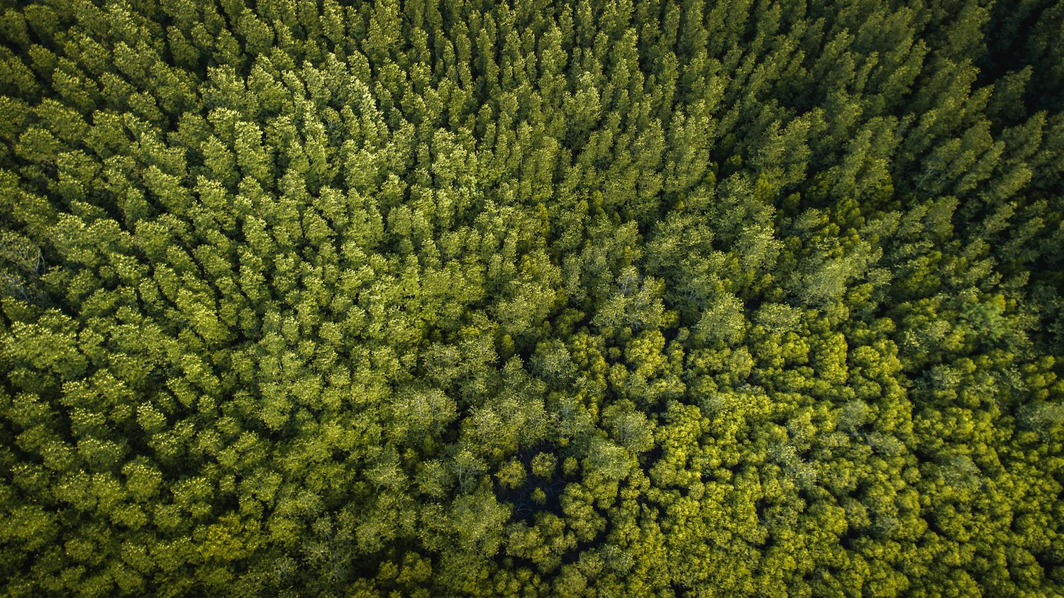 These Drones Can Plant 100000 Trees in One Day - Mental Floss