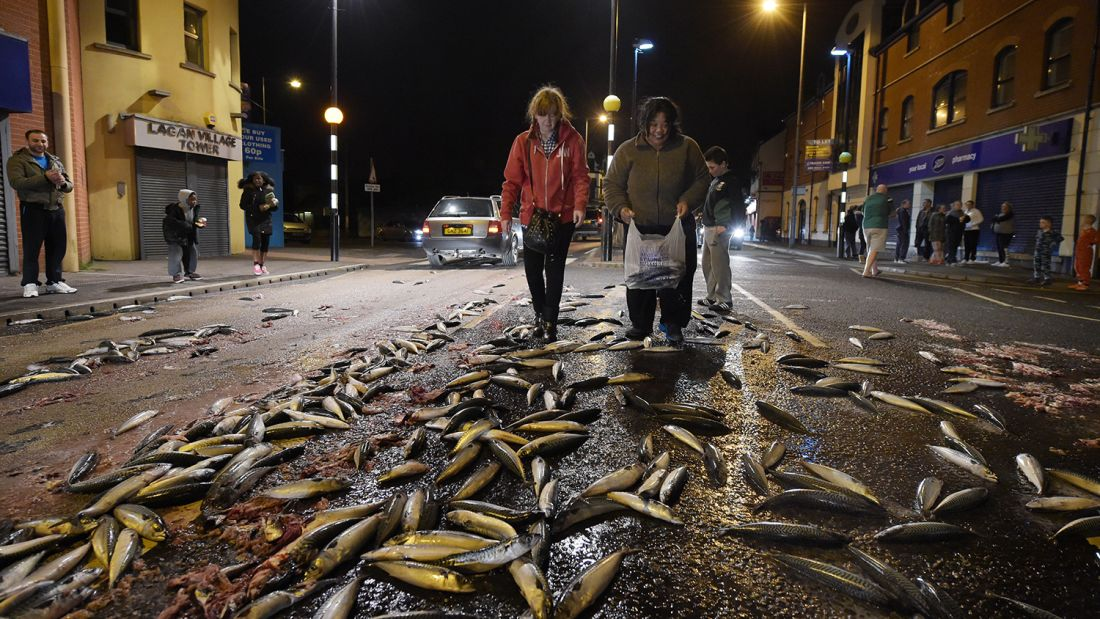 This scene was caused by a tanker full of mackerel spilling on a Belfast street in 2015, but a fish rain might look similar.