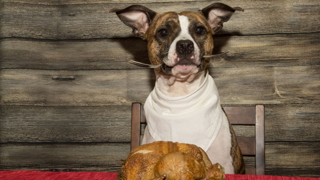 Even what the dog eats takes on a special significance on Thanksgiving.