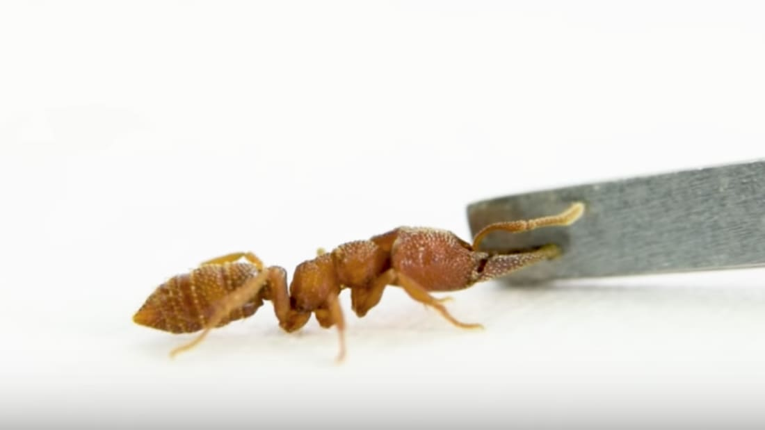 Ant Lab, YouTube