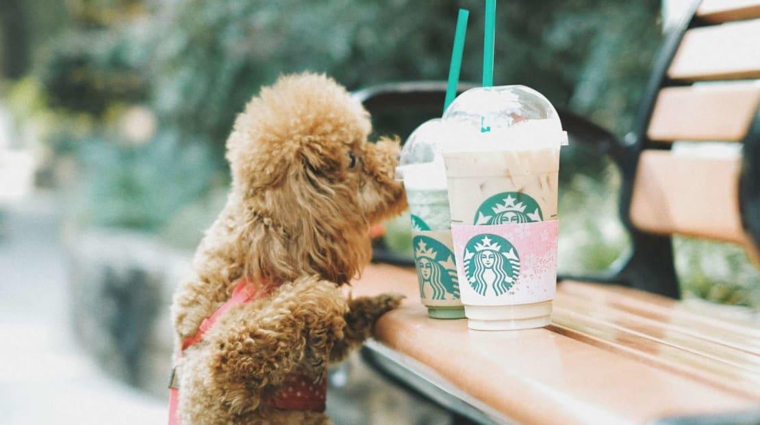 If you're craving Starbucks, they're craving Starbucks. Bring them to Starbucks.
