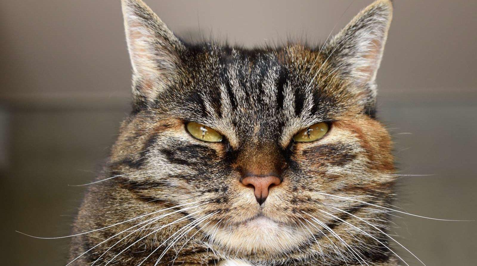626583-pixabay-pexels-adorable-angry-animal-animal-portrait-208984.jpg