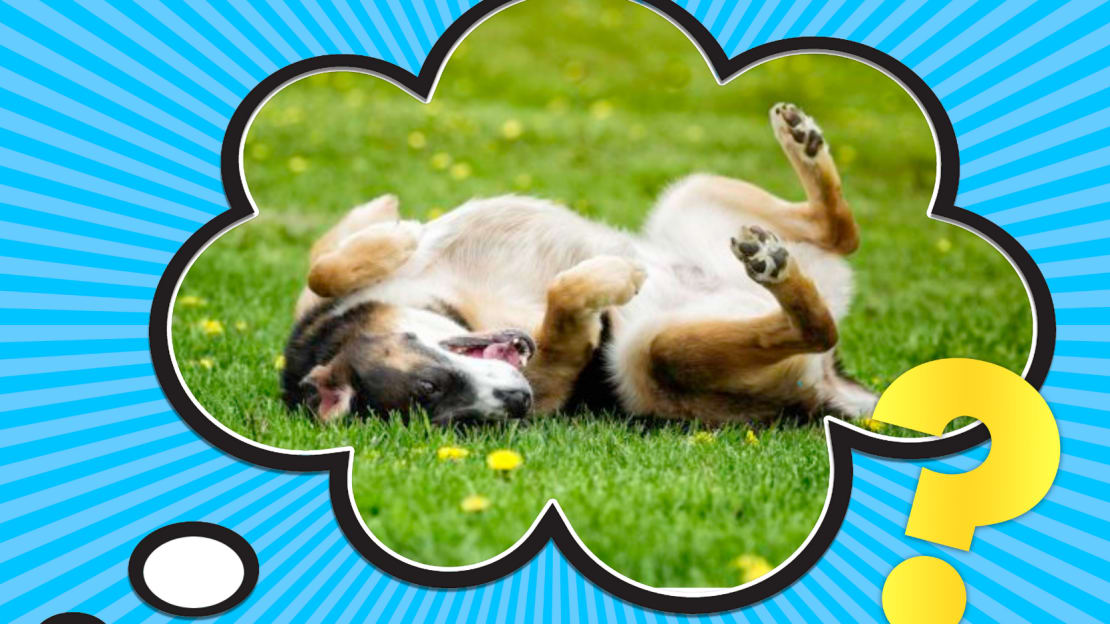 NicolasMcComber/iStock via Getty Images (dog rolling in grass)