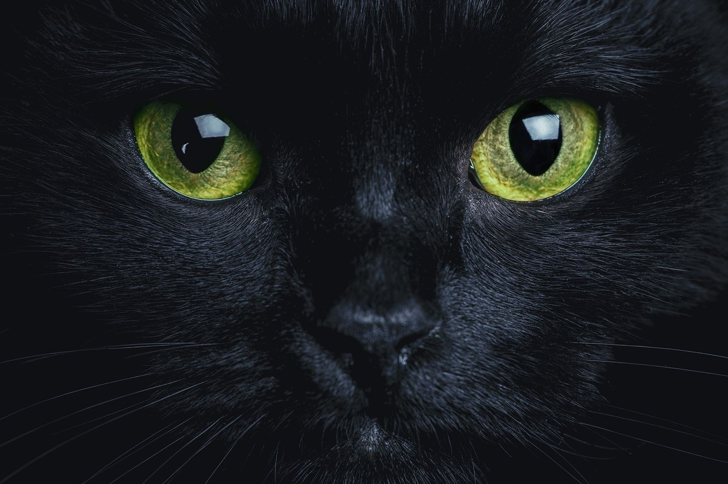 7 Superstitions About Cats From Around the World | Mental Floss
