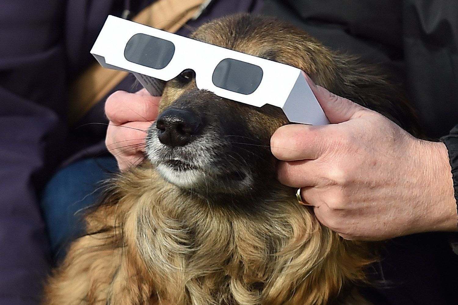 Pets Indoors During The Solar Eclipse