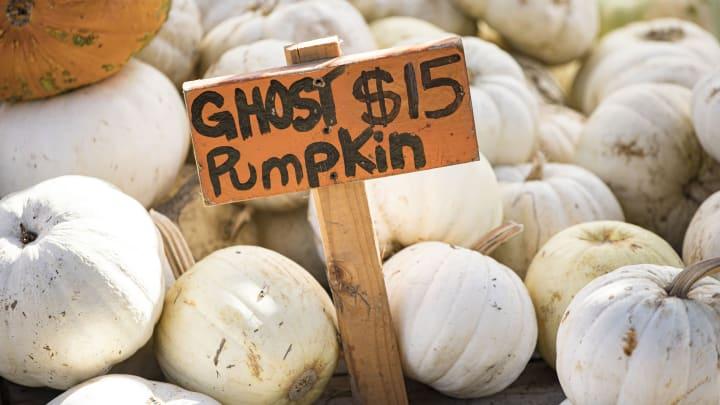 Mr. Jack O'Lanterns Pumpkin Patches Officially Open For 2021 Halloween Season