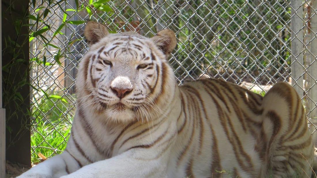 Emerald Coast Wildlife Refuge Zoological Park/Facebook