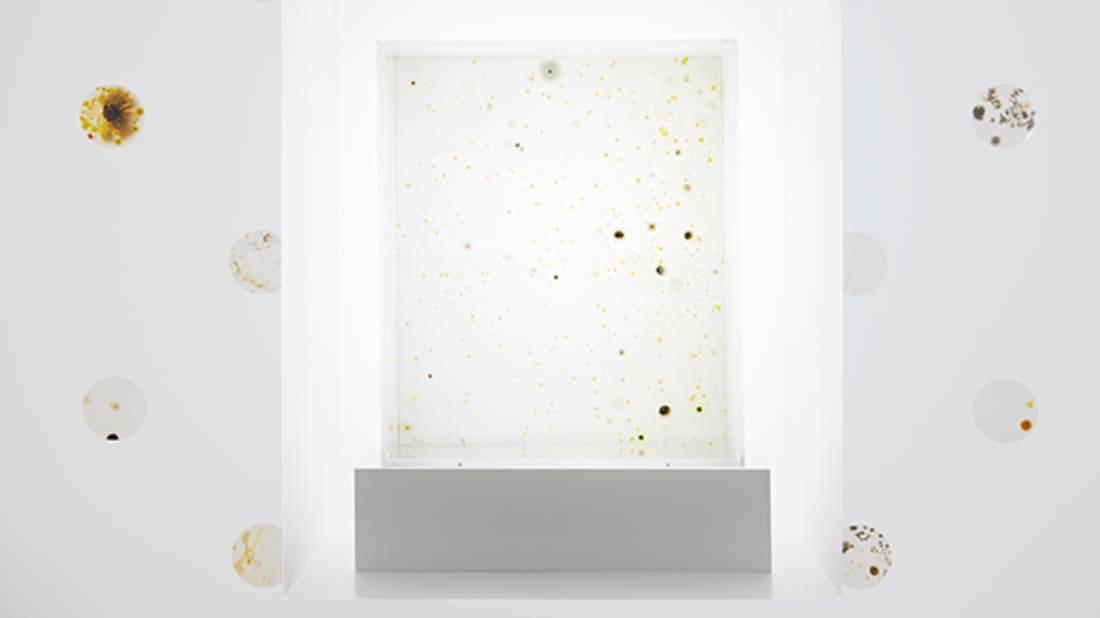 Artwork: 2666 by Anicka Yi, 2015. Photo: Philipp Hänger. Courtesy of the Guggenheim Museum.