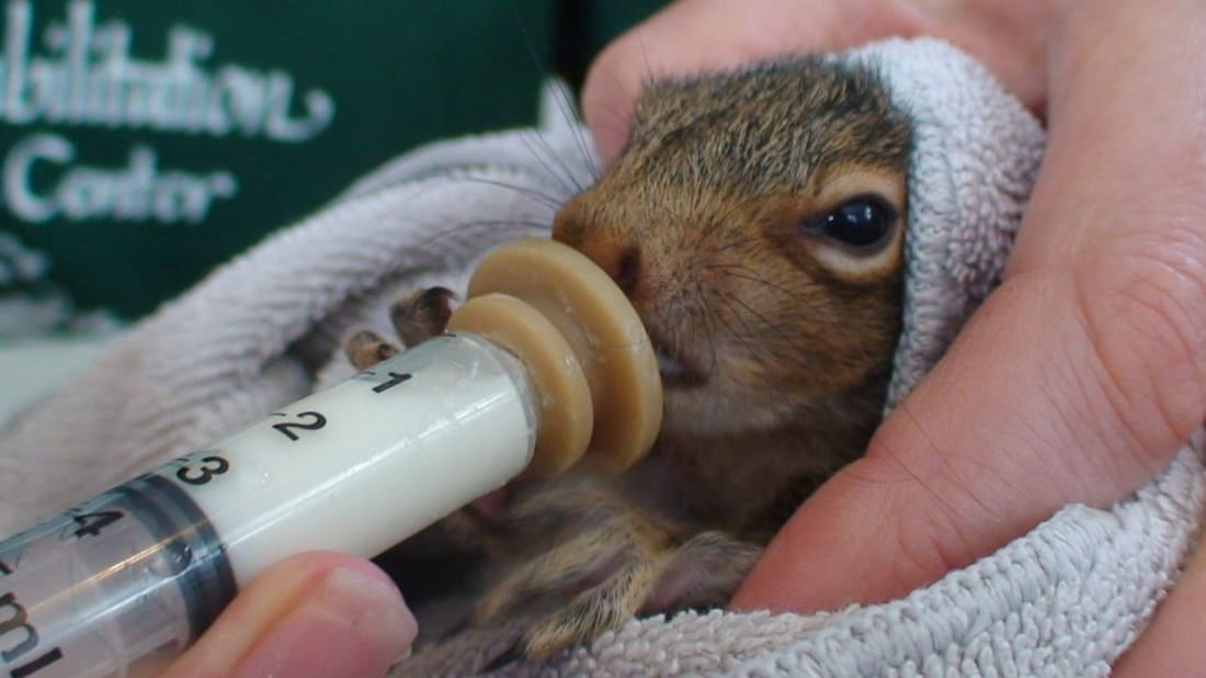 Aark Wildlife Rehabilitation and Education Center via Facebook