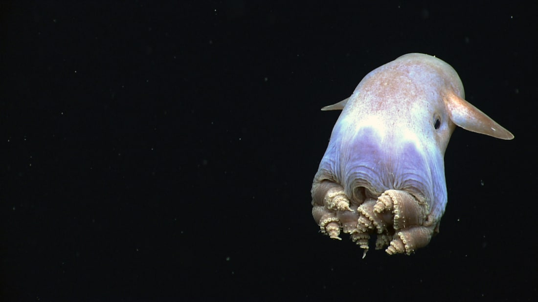 NOAA OKEANOS EXPLORER Program, Gulf of Mexico 2014 Expedition via Flickr Creative Commons // CC BY 2.0