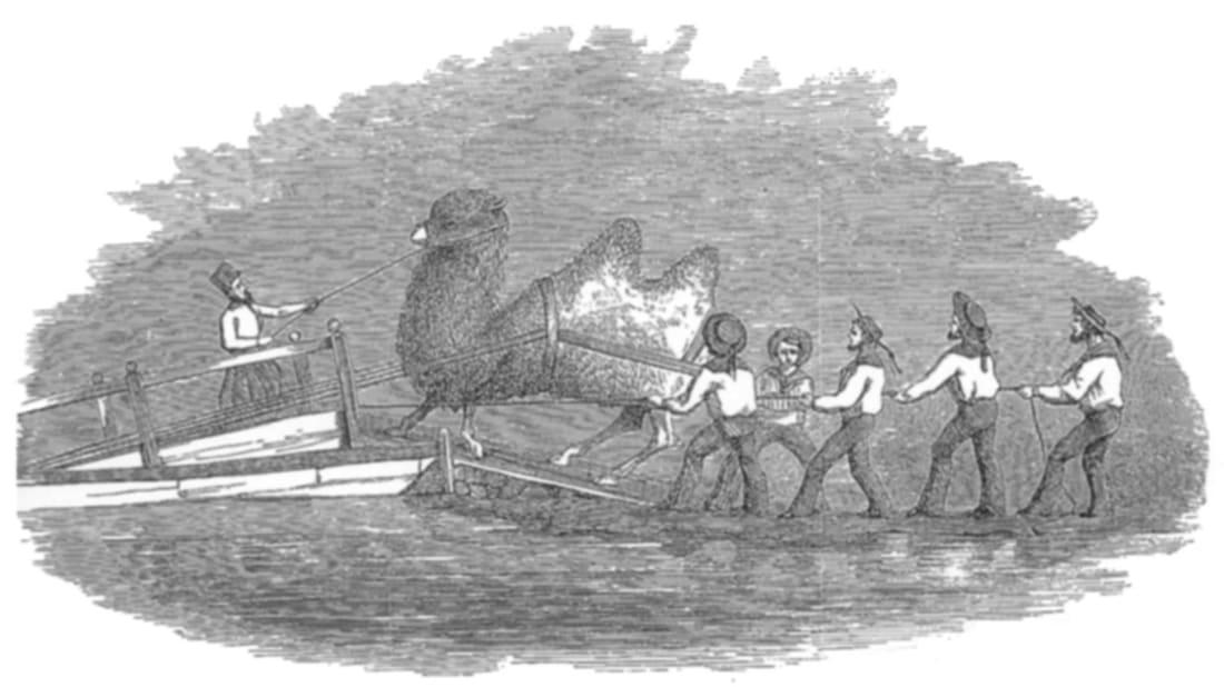 Gwinn Heap via Wikimedia Commons // Public Domain