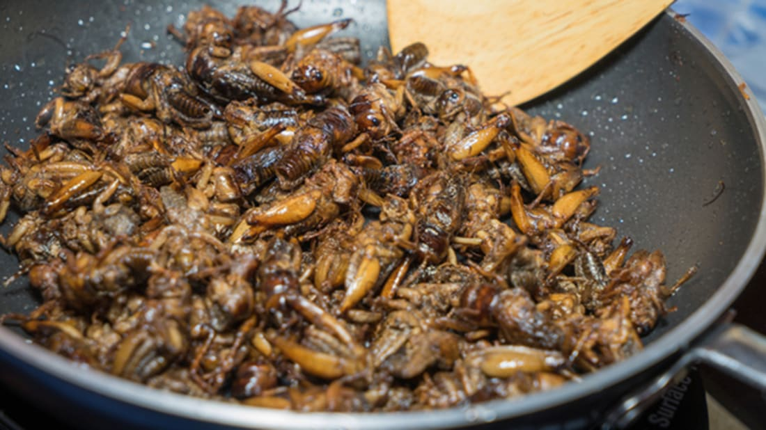 A Swiss Restaurant Now Offers Bug-Based Cooking Classes